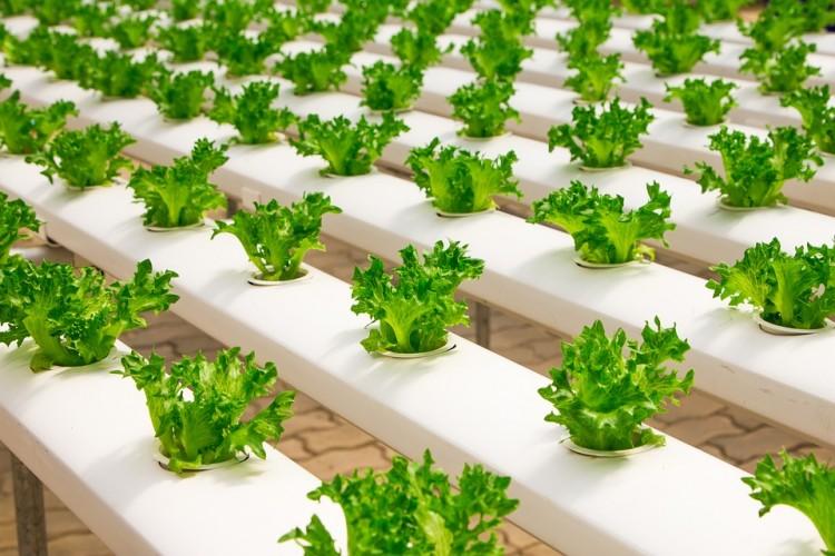 Faire grimper des plantes pour faire face à la croissance démographique et aux crises écologiques ?