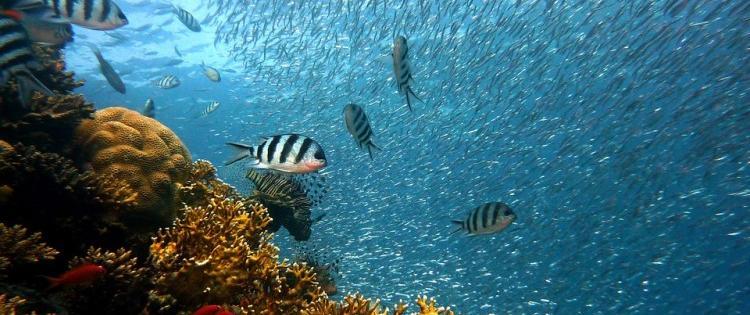 L'océan gravement malade