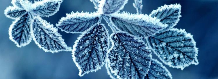 Alerte grand froid sur « l'espoir »
