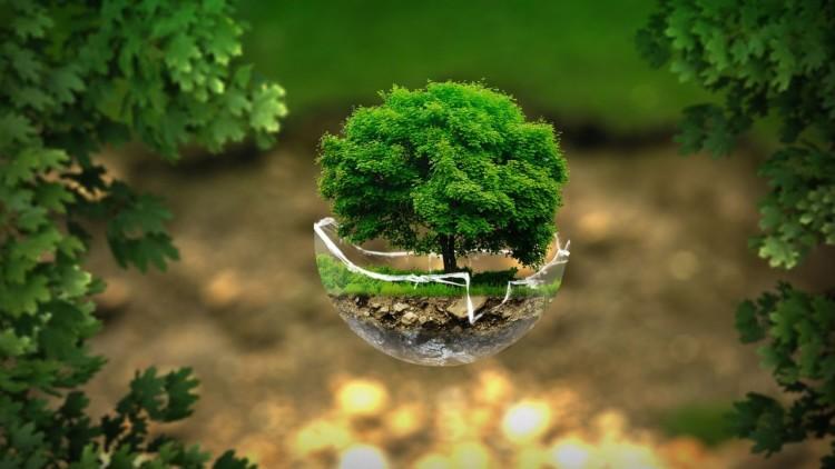 L'Environnement : un enjeu politique majeur pour les Français